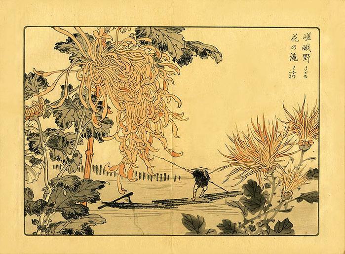 """байрэй коно. из книги """"100 видов хризантем"""""""