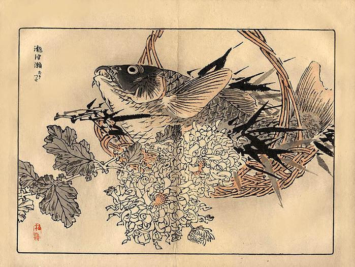 """байрэй коно. из книги """" 100 видов хризантем"""""""